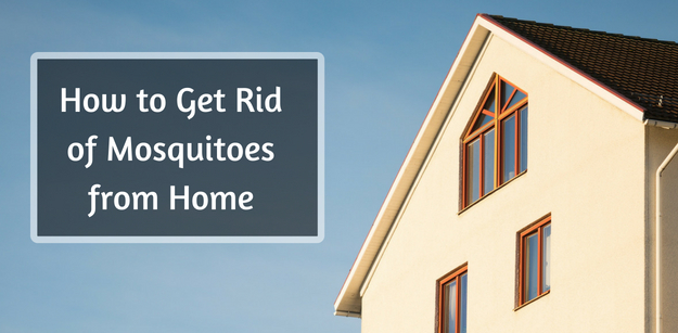 How to Get Rid of Mosquitoes from Home