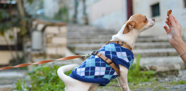 Walking Your Dog- The Benefits of a Harness Over a Collar You Need to Know