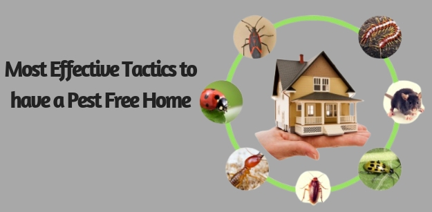 Most Effective Tactics to have a Pest Free Home