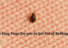 5 Easy Steps for you to Get Rid of Bedbugs