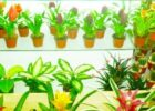 Tips for Choosing the Right Artificial Plants